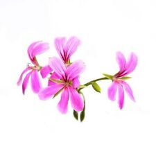 100% PURE & NATURAL ESSENTIAL OILS FROM INDIA (FREE SHIPPING) - ROSE GERANIUM