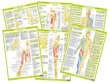 Human Nervous System Set of 6 Posters - Anatomy Nerves Body Sports Physio Charts
