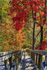 Cuadro de madera Wooden stairs in Autumn forest