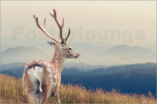 Aluminio-Dibond Deer standing on the mountain