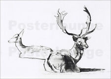 Cuadro sobre lienzo Lying deer couple - Mark Adlington