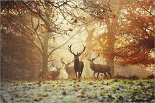 Cuadro sobre lienzo Stags and deer in an autumn forest with mist - Alex Saberi