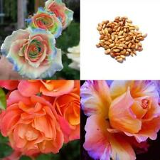 Rare Mixed Colors Rose Seeds Rainbow Rose Bonsai Flower Balcony Plant WT88 03