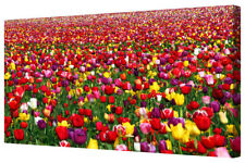 Tulip Field Flowers Colourful Floral Large Canvas Wall Art Picture Framed Print