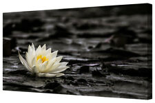 White Lotus Flower Water Lily Large Framed Dark Canvas Wall Art Picture Print