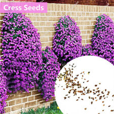 2AB3 Rare Rock Cress Seeds Plant Flower Seeds 1bag Beautiful Potted Beautifying