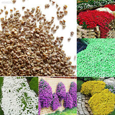1bag Living Plant Flower Seeds Potted 100pcs Landscaping Climbing Plant