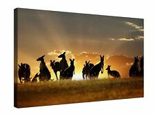Kangaroo Australia Sunset - Gallery Grade Canvas Wall Art + Various sizes
