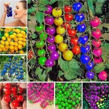 Beautiful colourful cherry tomato seeds Fruit and Vegetable Potted seed NEW