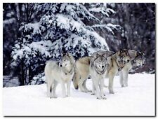 Quadro Tom Brakefield 'Pack of wolves in the snowy woods' Stampa su Tela Canvas