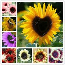 40 pcs/bag Sunflower Seeds For Planting Bonsai Flowers Home Gardening Planting