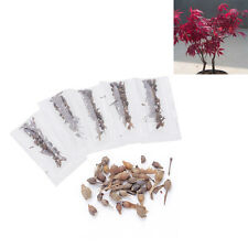 1Pack Gold /Purple /Blue /Red Maple Tress Seeds Spring Garden Bonsai Plant Seeds