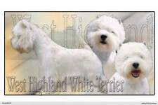 Autocollant Panoramique West-Highland-White-Terrier