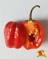 Semi Peperoncino Habanero Red Savina-Chocolate-Orange-Carolina Reaper-Scorpion