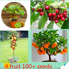 4 Kind Fruit ,Bonsai Fruit Tree Seeds ,Vegetable And Fruit Seeds Kiwi Cherry App