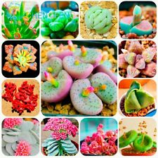 300/Bag Mix Succulent Seeds Lotus Lithops Pseudotruncatella Bonsai Plants Seeds1