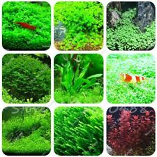 500/1000pcs aquarium grass seeds (mix) water aquatic plant seeds aquarium