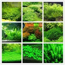 1000pcs aquarium grass seeds (mix) water aquatic plant seeds family easy plant s