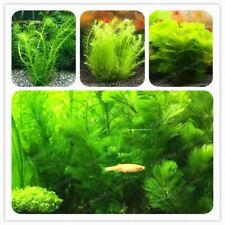 500 Pcs Aquarium Grass Seeds Water Aquatic Plant Seeds Water Grass Decor Landsca