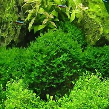 Live Fish Moss Fern Aquarium Plant Java Fish Tank Aquatic Seeds 1000 Pcs/bag