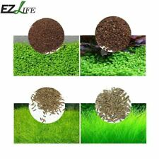 Aquarium Plant Seeds Aquatic Double Leaf Carpet Grass For Fish Tank