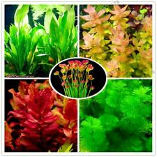 100pcs/bag Grass Water Aquatic Plant Seeds Fish Tank Plants Dwarf Pearl Plants