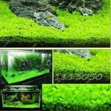 500 Pcs/bag Featured Aquarium Plant Fish Tank Background Aquatic Plants Seeds