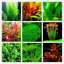 100pcs/bag Aquarium Plants Seeds Grass Water Aquatic Plant Seeds