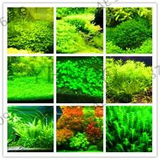 300 pcs / Bag Aquarium Grass Garden Water Grasses Aquatic Plant seeds