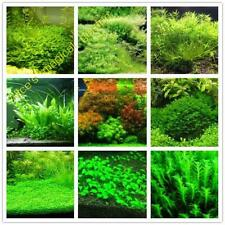 500pcs aquarium grass (mix) water aquatic plant seeds for aquarium