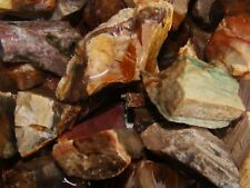 1000 Carat Lots of Unsearched Petrified Wood