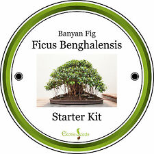 Banyan Fig-Complete Bonsai Growing Kit & Gift, 8 Fresh Seeds, Personalised Opt.
