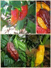 PEPERONCINO 15/50 SEMI BHUT JOLOKIA RED ORANGE E CHOCOLATE >1MLN SHU EX GUINNESS