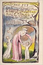 Poster / Leinwandbild Die Fliege - William Blake