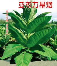 Tobacco 2000+ seeds 5g Organic Virginia leaf Heirloom Seeds easy grow