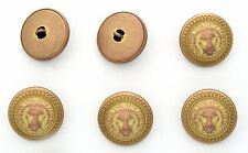 6 bottoni in metallo scatolati - LEONE - lion buttons