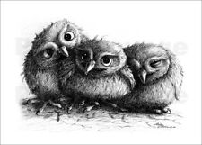Poster, stampa su tela o vetro acrilico Three young owls - ... - S. Kahlhammer