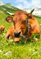 Póster, lienzo o cuadro en metacrilato Cow with bell on mountain pasture