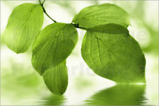 Poster / Toile / Tableau verre acrylique Green leaves - Atteloi