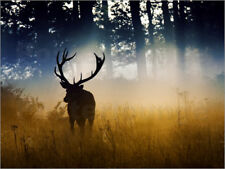 Poster, stampa su tela o vetro acrilico A red deer in the woods - Alex Saberi