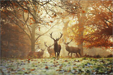 Poster, stampa su tela o vetro acrilico Stags and deer in an au... - A. Saberi