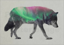 Poster / Toile / Tableau verre acrylique wolf in the aurora borealis - A. Lie