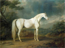 Póster, lienzo o cuadro en metacrilato White horse in a wooded ... - S. Gilpin