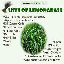Ambrosial Lemongrass Essential Oil Cymbopogon Citratus 100% Natural from India