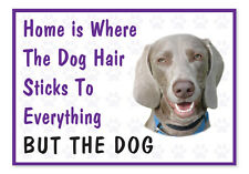 Home is Where The Dog Hair- Funny Weimaraner Vinyl Car Van Decal Sticker Pets