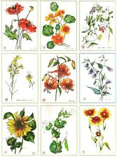11 Botanical ACEO / Limited Edition Prints of Original Paintings by Belaya