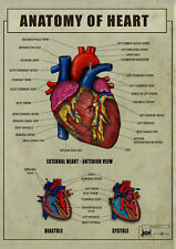 Human HEART Anatomy , function ver1 biology Poster Canvas Art print A4 A3 A2 A1