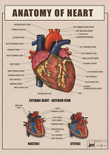Human HEART Anatomy , function ver2 biology Poster Canvas Art print A4 A3 A2 A1