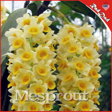 Free Shipping 100 Pcs A Bag Dendrobium Seeds, Potted Seed Flower In Bonsai Rare: