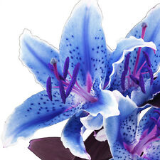 blue lily flower floral close up PHOTO WALL ART PICTURE CANVAS PRINT DECOR